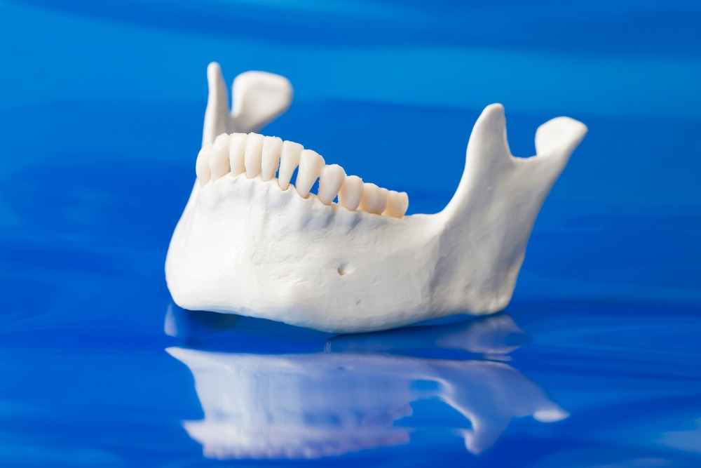 a model of the lower jawbone